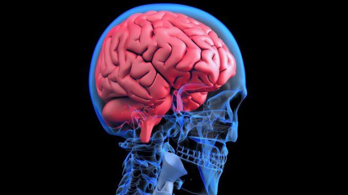 Gehirnvenen