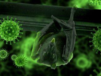 Möglicher Ursprung in Wuhan: Fledermäuse